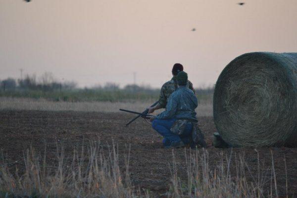 Dove Hunting at Lone Star Hunts