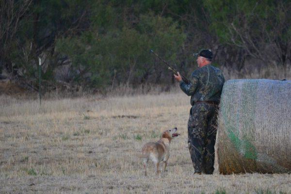 Lone Star Hunts - Dove Hunting Season Hunter and Dog