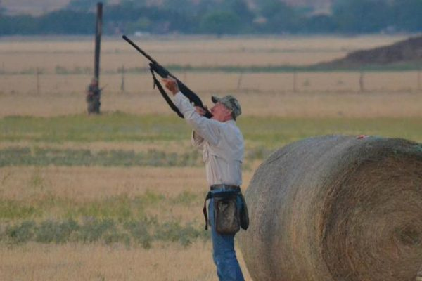lone-star-hunts-dove-hunter